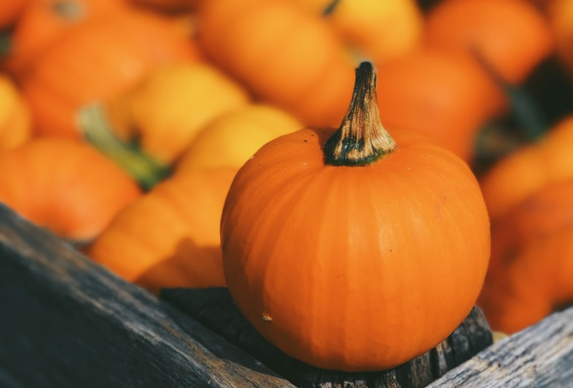 2020 Fall Produce: Fruits and Vegetables You Can't Miss Out On